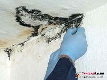 Плесень необходимо полностью очистить и обработать потолок антисептиком